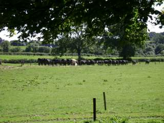 Ardsollus Farm View and Cattle